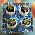 Flowers in an eggshell: 23 examples of Easter and spring creativity