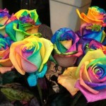 Presents for mom: Multi-colored roses