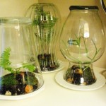 How to make a terrarium for mother's day plants